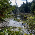 Great Beaver Swamp