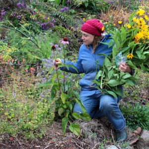 Cedana in the Food Forest