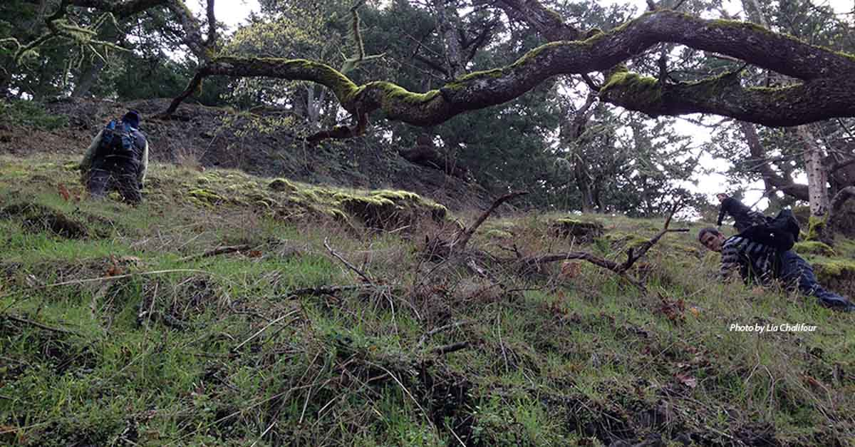 Climbing Mount Sutil for Restoration and Species at Risk work