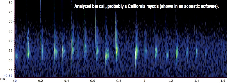 bat call sonogram