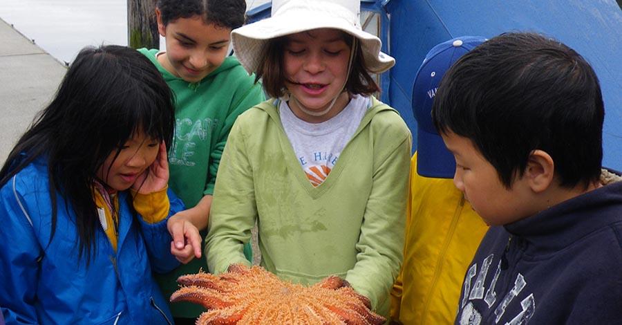 kids and starfish