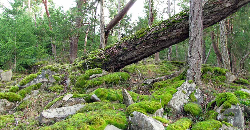 conservation fallen tree