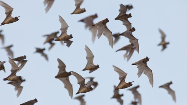 http://www.cbc.ca/news/canada/british-columbia/wanted-new-home-for-one-of-b-c-s-biggest-bat-colonies-1.3756305