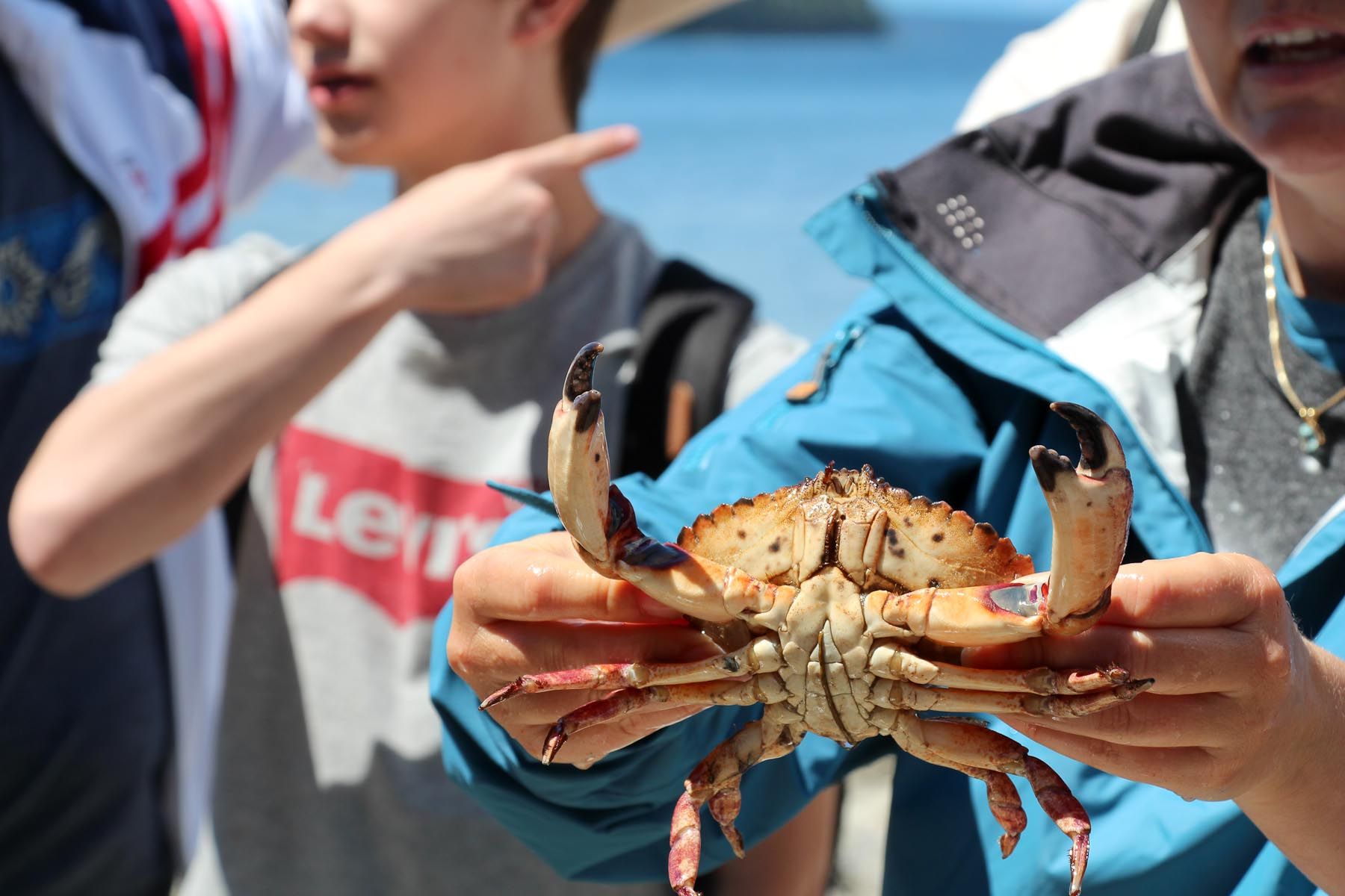 Crab molt.